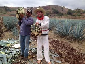 IMG 2234 300x225 El Jimador Blanco   (the Gringo Tequila harvester)