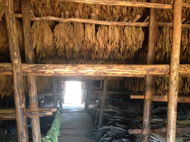 fermenting tobacco leaves