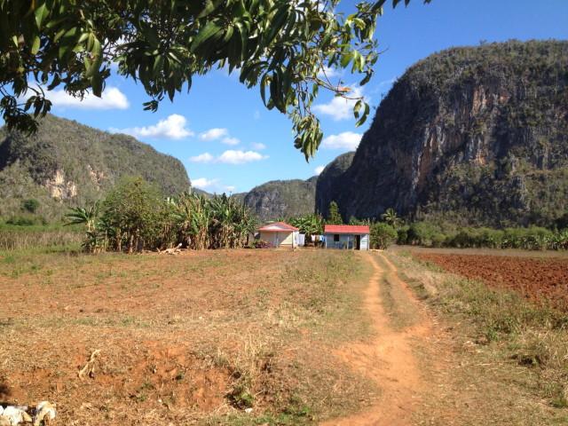Cuban farm