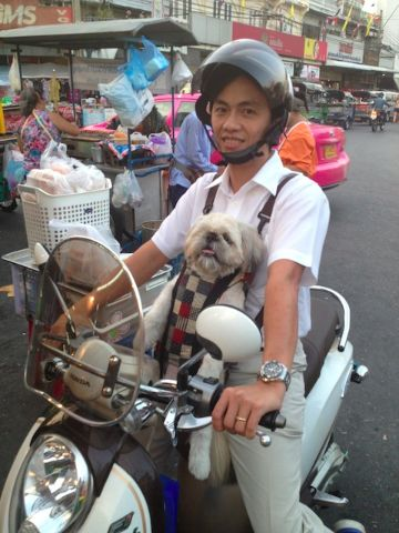 dog on motor cycle