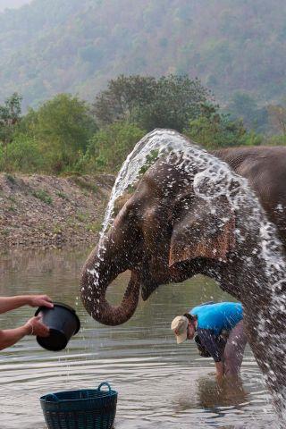 Elephant job bath