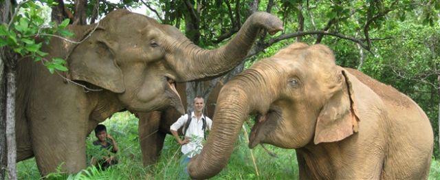 elephant volunteering jobs