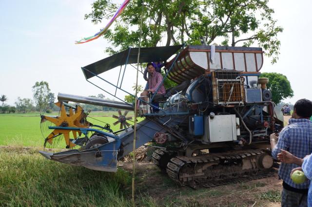 chianat rice field