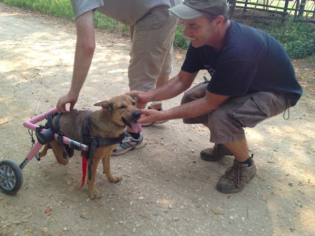 Volunteering Jobs with Dogs in Thailand