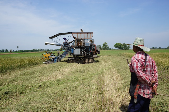 a rice farmer stoically looks on, seeing himself become obsolete